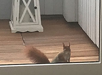 Poppy the Squirrel